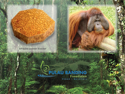 Louis Moinet : le roi de Malaisie se déplace pour le lancement de la montre Geograph Rainforest