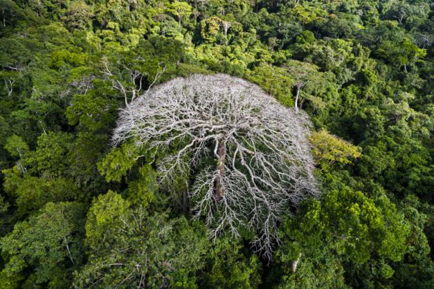 Arbre isolé dans le parc national de l'Ivindo, province de Ogooué-Ivindo, Gabon © Yann Arthus-Bertrand