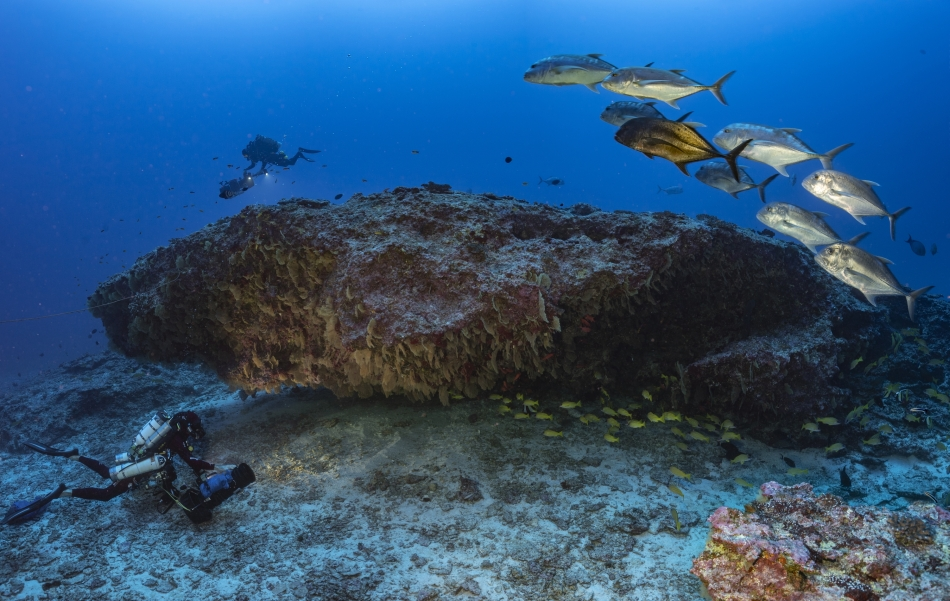 La Perouse - Underwater cave © Laurent Ballesta
