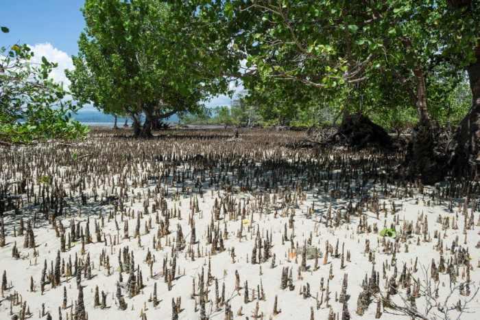 Omega : lancement de « Time for the Planet » en Indonésie