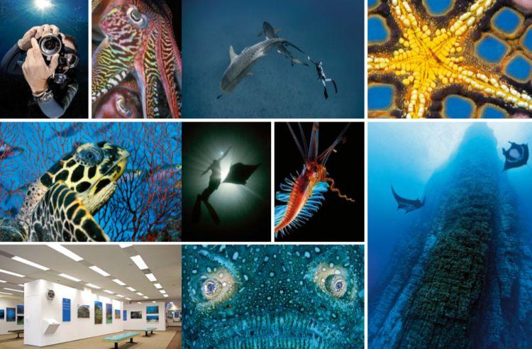 Blancpain : sauver les océans !