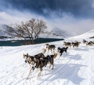 Alpina : chronométreur officiel de la 15ème Grande Odyssée Savoie Mont Blanc