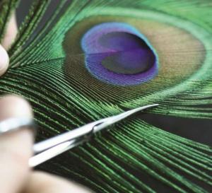 Corum Feather Watch : paon et geai bleu
