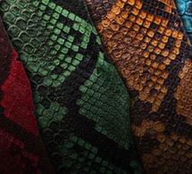 ABP Concept : du python de toutes les couleurs... ou presque !