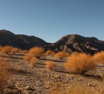 Richard Mille partenaire de Desert X 2021